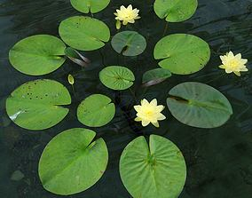3D model American white waterlily