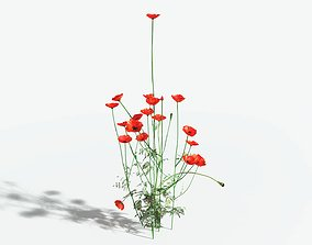 3D asset EVERYPlant Field Poppy LowPoly 10 --16 Models--