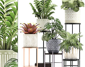3D model garden Collection of Exotic plants