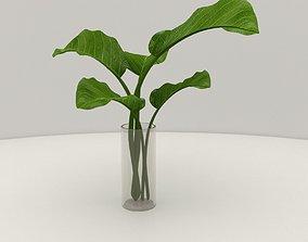 Plant in glass vase 3D model