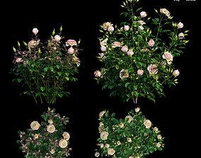 Plant rose set 09 3D model