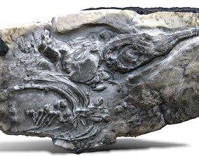 3D asset low-poly Fossil Ichthyosaur