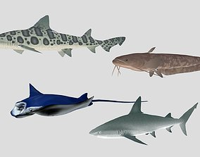 3D asset Fish Collection 06