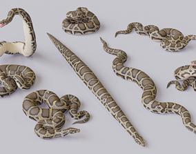 VR / AR ready Burmese Python - 3D Mesh