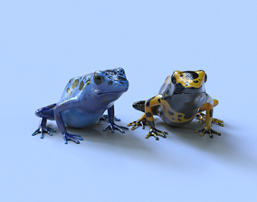 3D Poison Dart Frogs Package animal