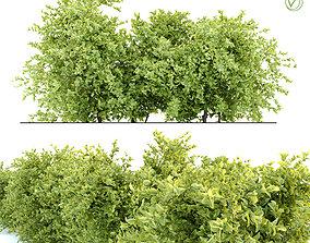 Bush 2 3D model