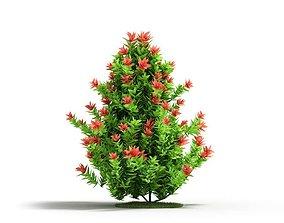 Tall Flowering Plant 3D
