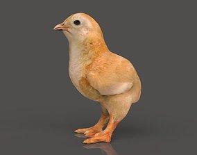 Chick Pulcino 3D model