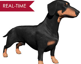 3D model Dachshund Real-Time