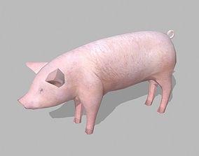 3D asset farm pig