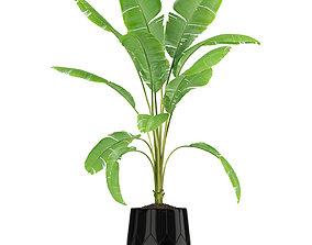 Plants collection 185 3D