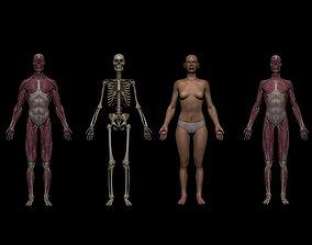 Ultimate Human Basemesh Collection 3D model