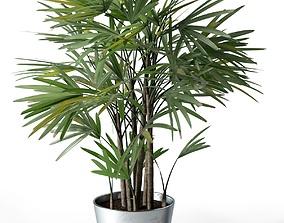 Rhapis Excelsa in Pot 3D model pot-plant