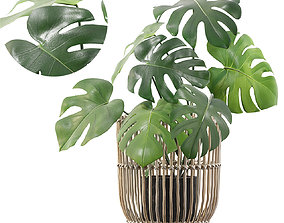 3D model Monstera in rattan stand