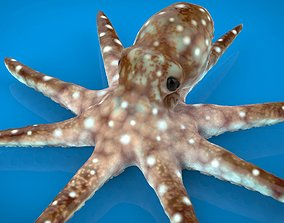 3D model VR / AR ready OCTOPUS tropical