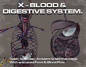 Cross Section Circulatory and Digestive System 3D
