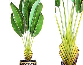 Ravenala palm 5 3D model