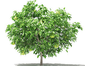 3D model Pomelo Tree with Fruits