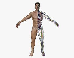 Human Male Full Body Anatomy 3D