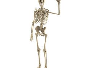 medicine Human skeleton 3D model
