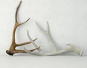 3D Deer Antlers