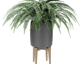 3D Plant in Pot Flowerpot Exotic Plant