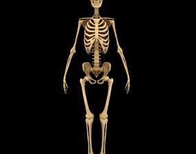 Full Body Skeleton System Anatomy legs 3D