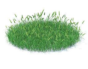 Flowering Grass 3D Model plant