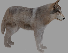 3D model wolf with fur