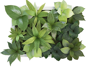 Plant Frame 40 X 30 Cms 3D model