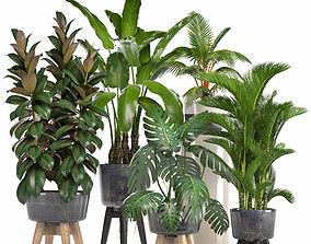 Collection of ornamental plants in pots pot-plant 3D