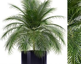 Plants collection 159 3D model