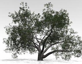Live Oak - Variation B 3D