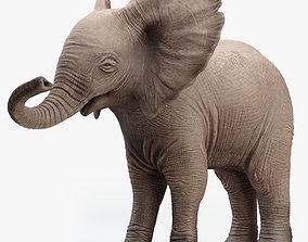 Elephant Baby Rigged 3D asset