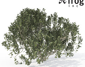 3D XfrogPlants Fig
