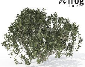 3D model XfrogPlants Fig