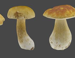 3D asset low-poly Bolete Mushroom Pack 1