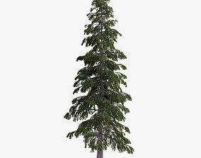 3D fir-tree