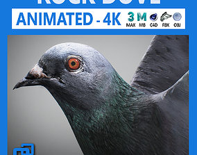 Rock Dove Animated 3D