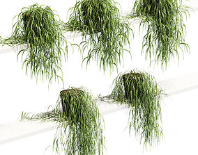 3D Hanging Potted Plant On The Shelf - 5 Models