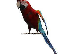 Parrot Animated 3D asset