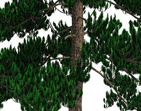 greenery 3D Pinus Sylvestris A