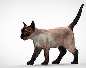 REALISTIC CAT 3D model