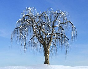 3D model Weeping Willow Tree