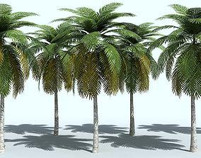 Palm Tree 3D tree