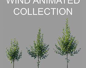 3D model Tilia platyphyllos wind animated collection