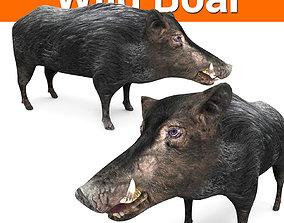3D Wild Boar 3D Model hunter game-ready