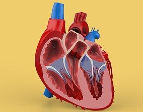 3D HUMAN HEART CROSS SECTION ANATOMY