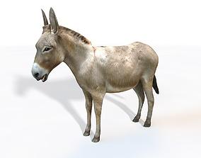 3D model Donkey Rigged