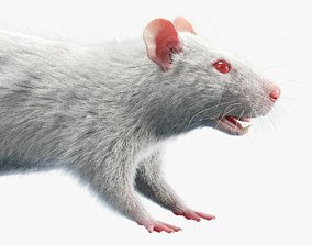 Rat Fur White 3D